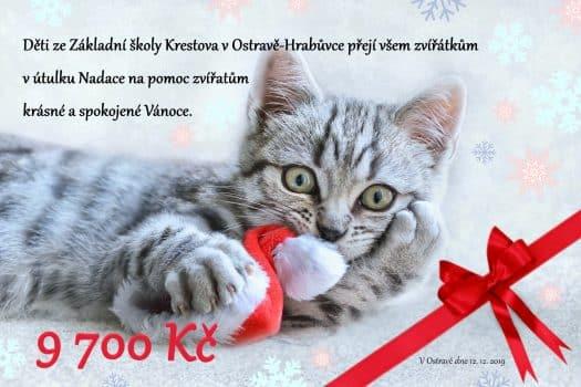 darovací poukaz kočka